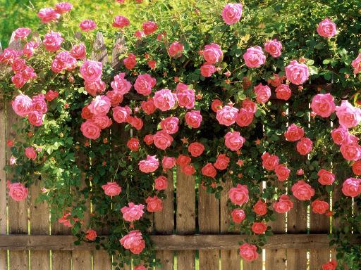 Cvijeće oko kuće  - Page 2 12441901