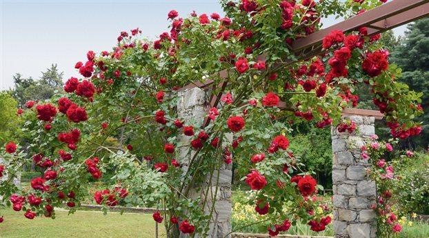 Cvijeće oko kuće  - Page 2 12684726