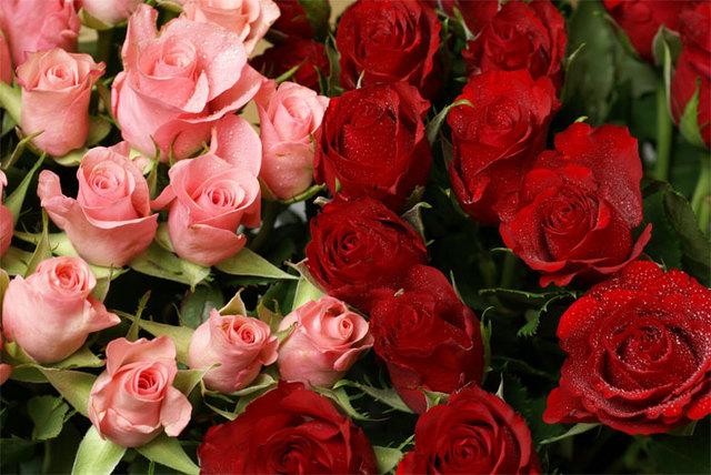 Ruže - Page 2 12701716