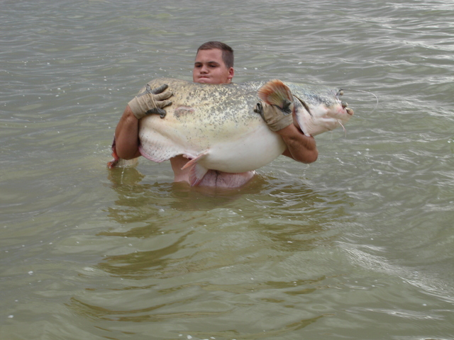 how to catch monster catfish from the bank