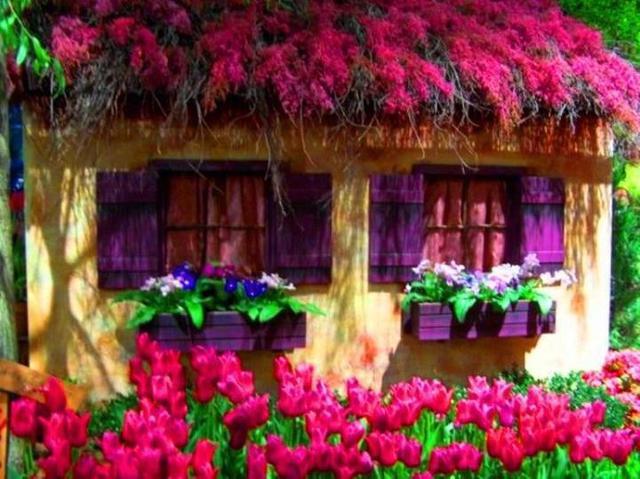 Cvijeće oko kuće  - Page 2 12803351