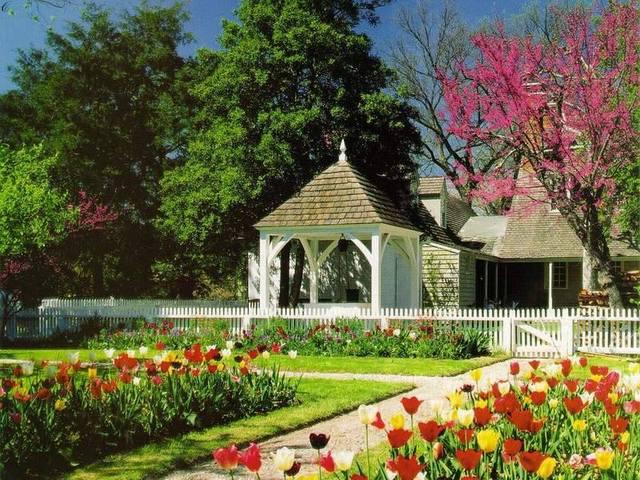 Cvijeće oko kuće  - Page 2 13043981