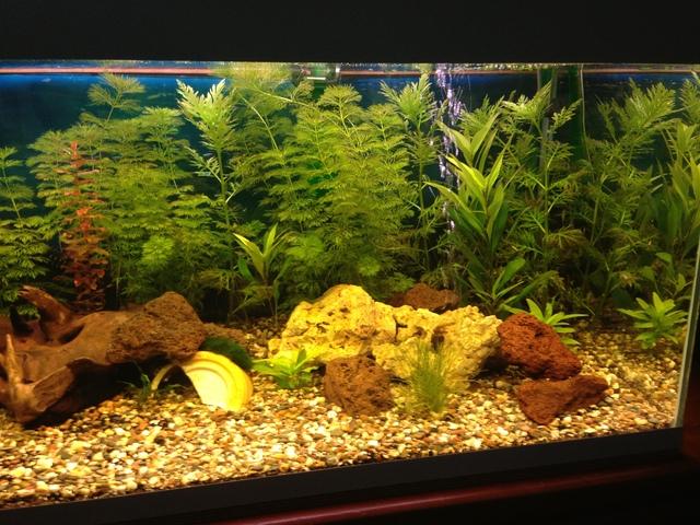 Nieuw aquarium   Pagina 2