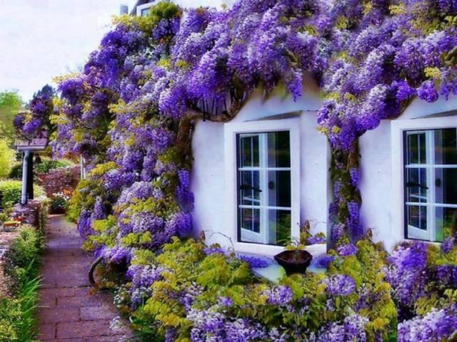 Cvijeće oko kuće  - Page 3 13349811
