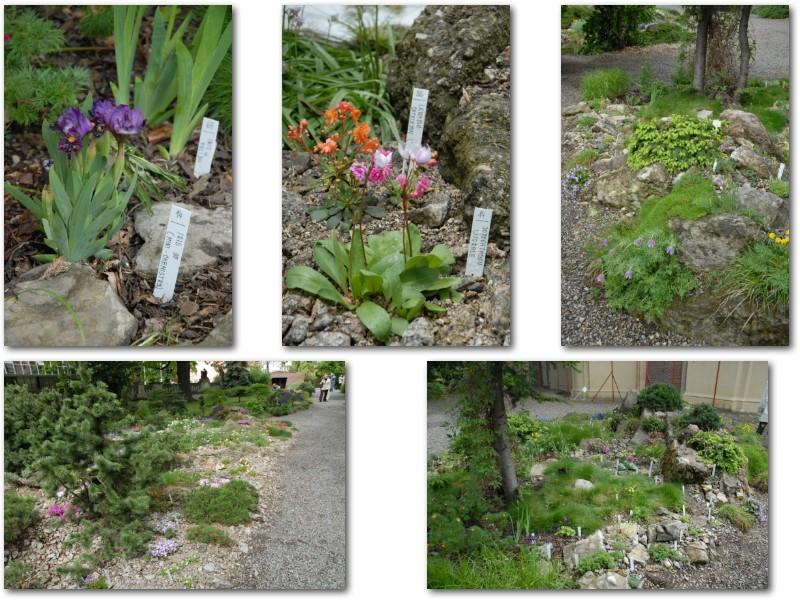 Rock' Gardener Club Prague 1711861