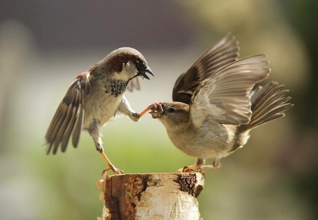 helen bird schrijfster