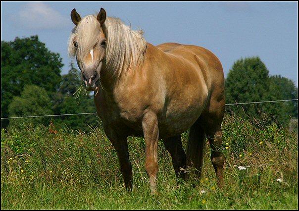 Zooooveel dikke (en veel te dikke) paarden..... • Bokt.nl: www.bokt.nl/forums/viewtopic.php?f=110&t=1598494&start=25