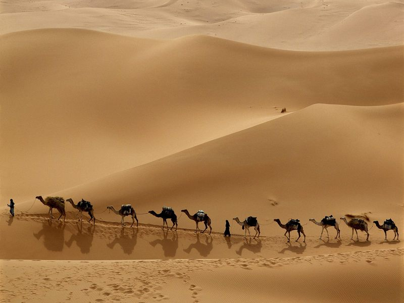 [Immagine: carovana-di-cammelli-nel-deserto.jpg]
